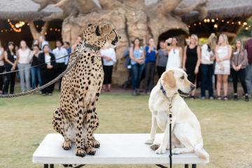 cheetah & dog
