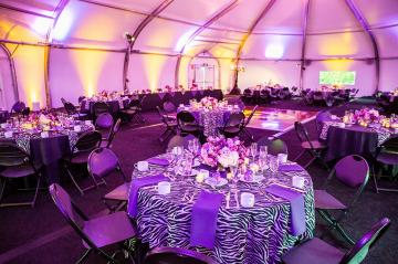 ZPA tent inside with purple and zebra