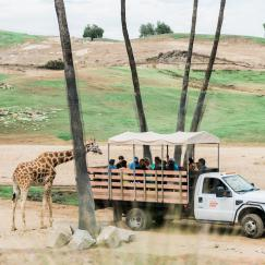 caravan safari photos