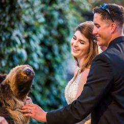 bridal couple with sloth