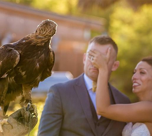 couple visits with a hawk